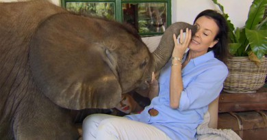 Story of rescue Moyo the baby elephant