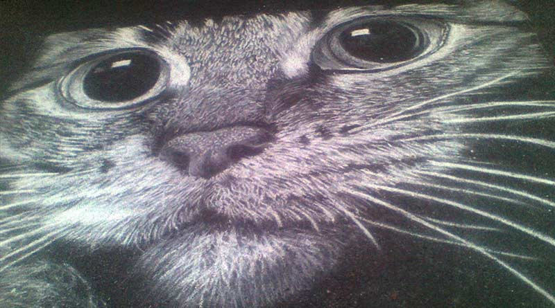 Chalk masterpieces by Rustam Valeev. Cat face.