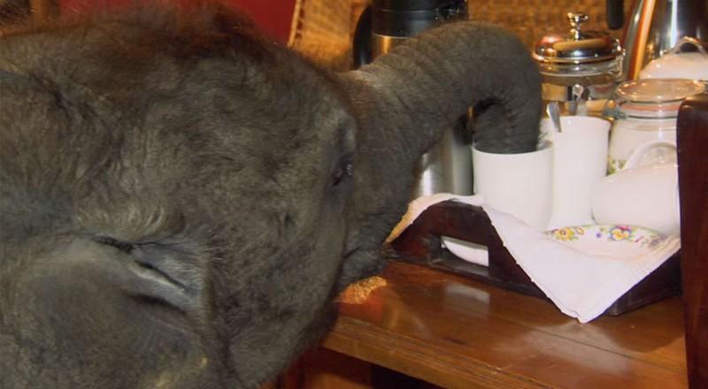 moyo_baby_elephant_rescue_01