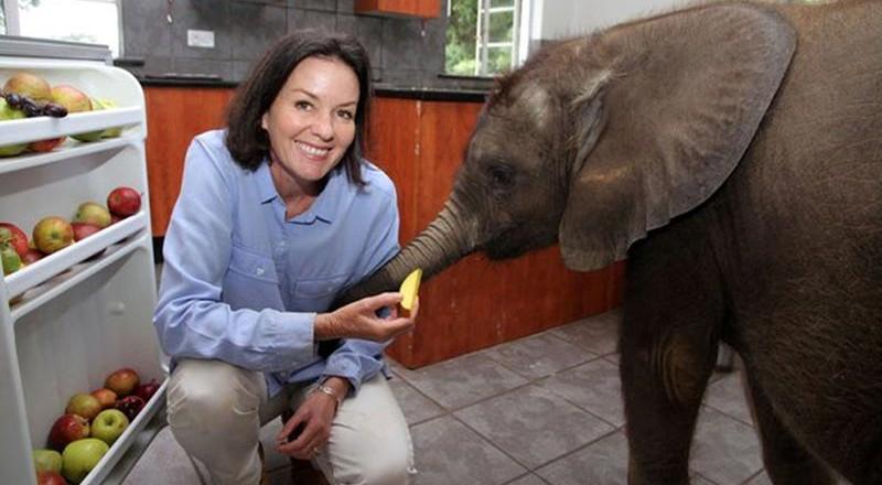 moyo_baby_elephant_rescue_03