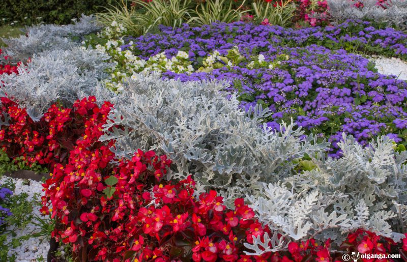 Flower combination on flowerbeds