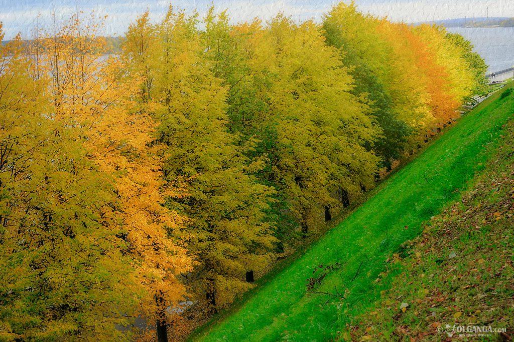 Golden trees in autumn, Yaroslavl 2016