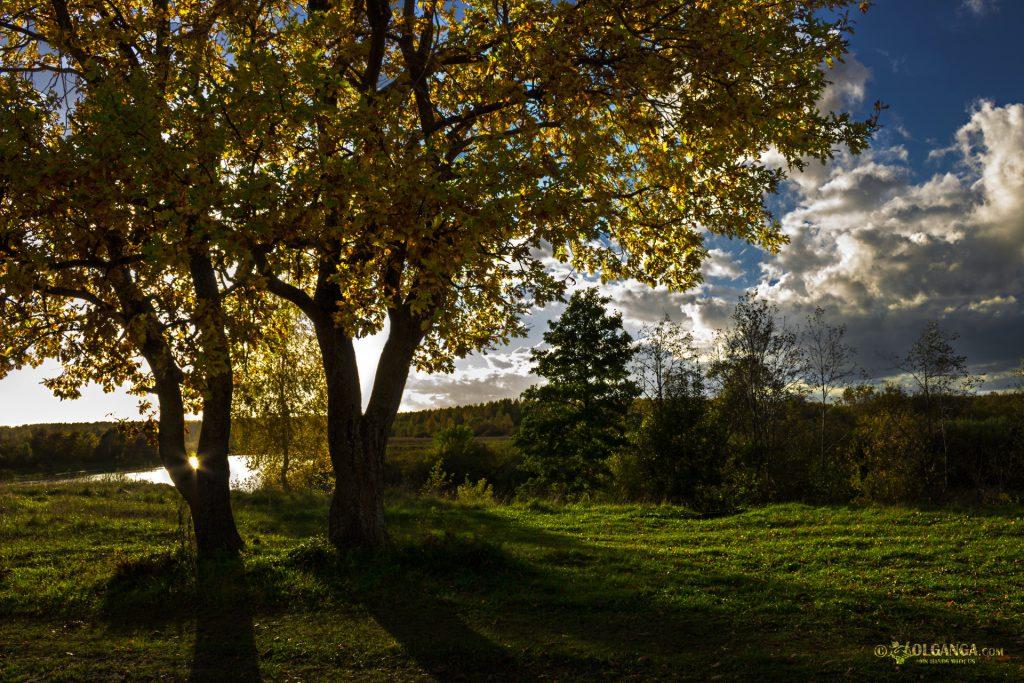 Golden trees in autumn. Russia 2016
