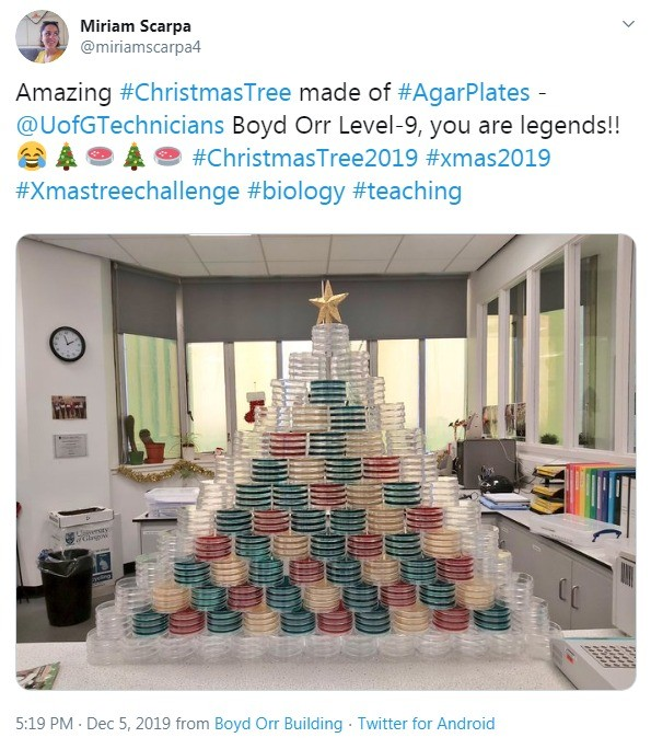 Agar plate Christmas tree