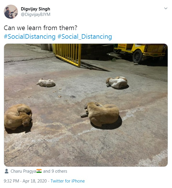 Dogs observing social distancing