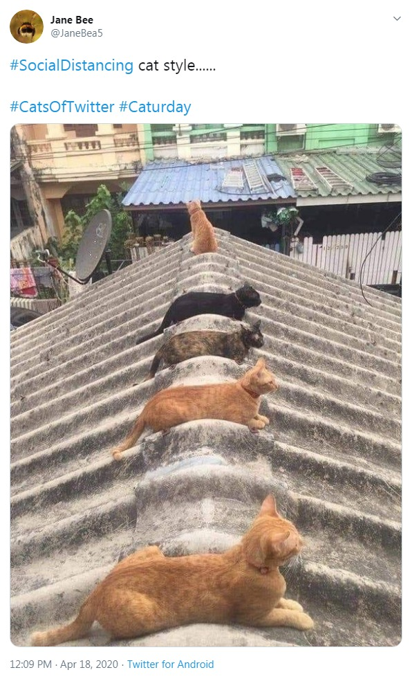 Cats following social dintancing rule