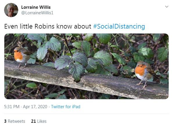 Little birdies demonstrating social distancing