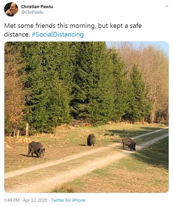 Boar style social distancing