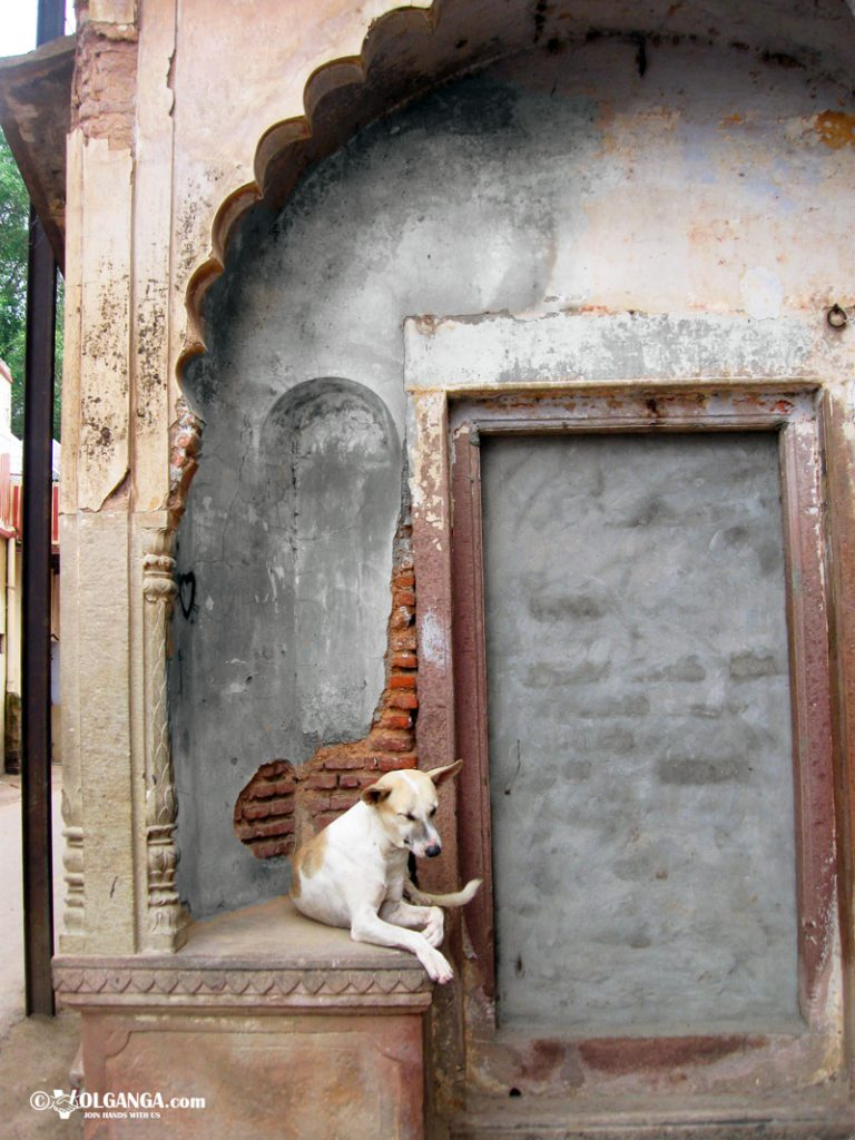 Sleepy dog in Varanasi lane